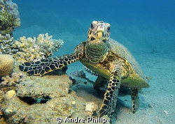 """""""Is my pose okay?""""  ;-) - a very interested and cooperati... by Andre Philip"""