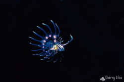 Flying~