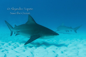 Bull Sharks, Playa del Carmen Mexico by Alejandro Topete