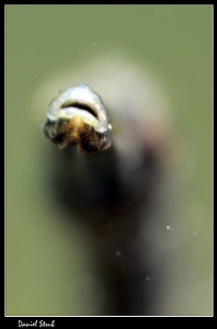 Mouth of a bentstick pipefish :-D by Daniel Strub
