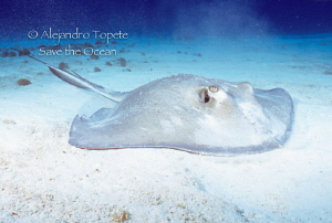 Ray in the bottom, Cozumel Mexico by Alejandro Topete