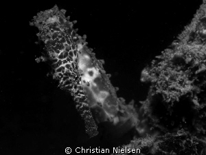 One of the many good encounters on a night dive on Padre ... by Christian Nielsen