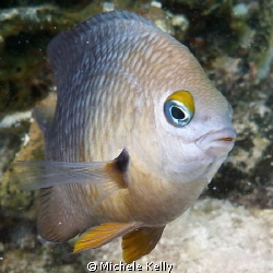 Damselfish protecting his reef from that lady with the ca... by Michele Kelly