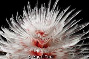 ombrellini by Marco Fierli