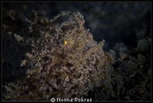 Yellow eye by Nonna Pokras
