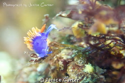 I took this image off Catalina Island, California.  It's ... by Janice Carter