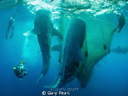 Interacting with Giants  An image from an early explora... by Gary Peart