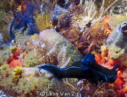 Such beautifull colours in Simonstown S.A by Leon Van Zijl