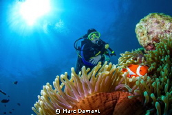 """""""A Swim With Nemo"""" We had a beautiful spot of sun at Bon... by Marc Damant"""