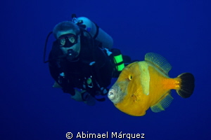 Evelio and the Whitespotted filefish by Abimael Márquez