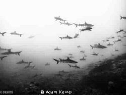 Wonderful dive in Fakarava lagoon, south pass in the Tuam... by Adam Kerner