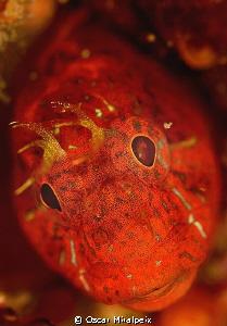 red face by Oscar Miralpeix