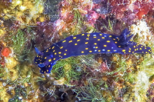 Nudibranch, la Paz Mexico by Alejandro Topete