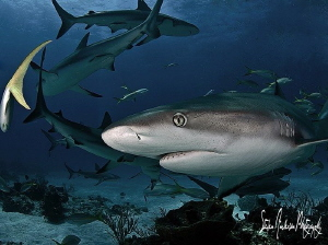 A beautiful day on the deeper reefs of the Bahamas by Steven Anderson
