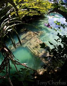 Japanese Sea Plane Wreck, Rock Islands, Palau by Tony Cherbas