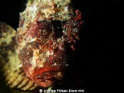 Scorpaena scrofa in the dark Canon G7 + Underwater Photo... by Andrea Filippo Bianchini