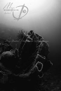 Spongeland by Mona Dienhart