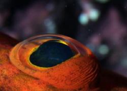 Fisheye, 100mm macro with 1.4 teleconverter by Martin Dalsaso