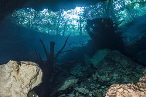 Chack Moll cenote, Playa del Carmen Mexico by Alejandro Topete