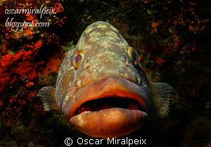 grouper by Oscar Miralpeix