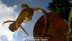 see ya later aligator.... by Claudia Weber-Gebert