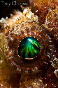 Lion Eye by Tony Cherbas