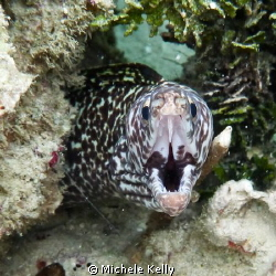 Moray eel with sharp teeth by Michele Kelly