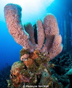 Underwater world at Salt Pier in Bonaire by Marteyne Van Well