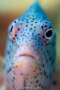 fish portrait by Stan Flachs