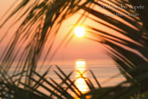 Sunset on the Palm, Acapulco Mexico by Alejandro Topete
