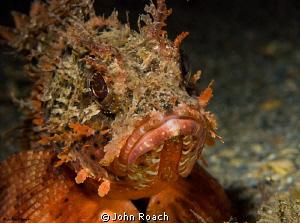 Barbfish under the bridge by John Roach