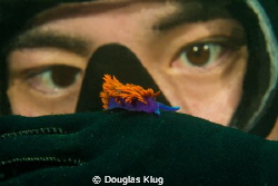 Eyeing Colors. A diver with a close-up encounter of a Spa... by Douglas Klug