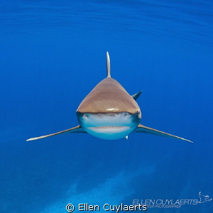 Stealth Mode  Most beautiful sight when an oceanic whit... by Ellen Cuylaerts