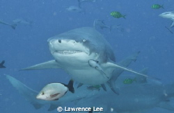 I am smiling at you, you are not my lunch though! by Lawrence Lee