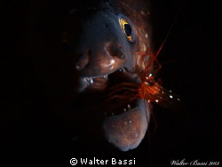 """The dentist"" by Walter Bassi"