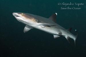 White Tip Shark in the Dark, Isla Coco Costa Rica by Alejandro Topete