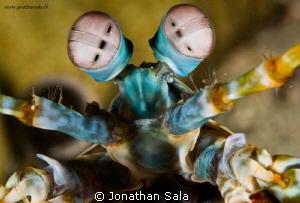 alien? :-) by Jonathan Sala