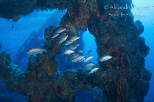 Pargos en Plataforma, Plataforma Tiburon Mexico by Alejandro Topete