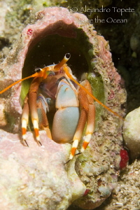 Hermitan Crab, Veracruz México by Alejandro Topete