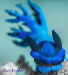 Blue beauty by Doris Vierkötter
