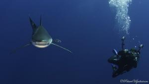 Blue shark and photographer. Azores. Canon 7D. Tokina 10-17. by Petteri Viljakainen