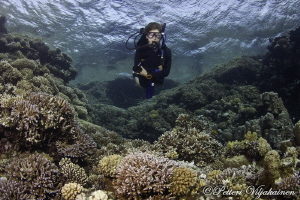 Diver at coral garden. Red sea. Egypt. Canon 7D. Tokina 1... by Petteri Viljakainen