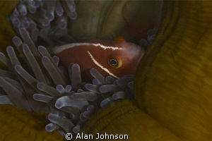 backing into his anenome home by Alan Johnson
