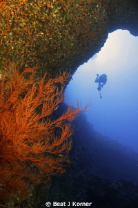 Black coral in front of a photographer diver. by Beat J Korner