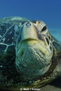 A Turtle face full of wisdom. by Beat J Korner
