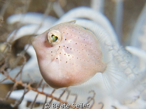 Very small file fish by Beate Seiler