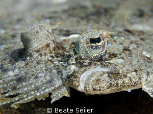 Flounder face by Beate Seiler