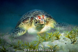 turtle by Babula Mikulova