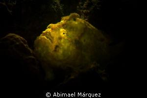 Chiaroscuro, Rembrandt technique. by Abimael Márquez