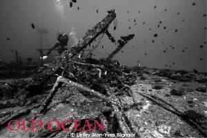 Canon 7d Ikelite .Mauritius ,Balaclava.30 metres ,shipwre... by Linley Jean-Yves Bignoux